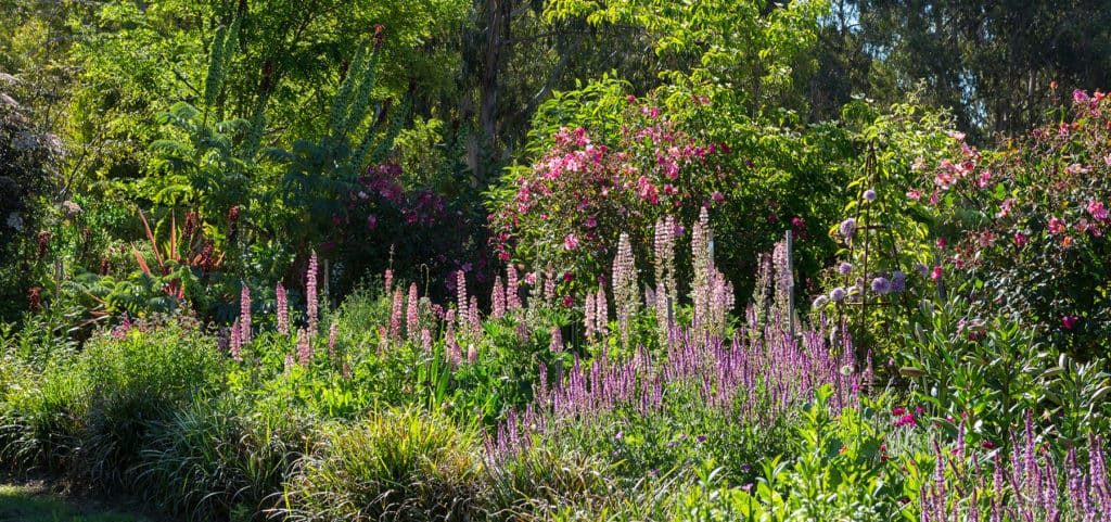 Plane Trees Estate - The Garden - Full Bloom